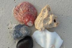 Fünf Elemente Muscheln