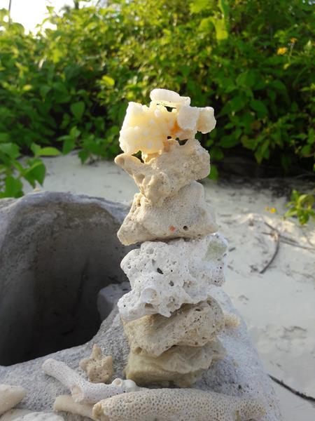 Lebenssteine Malediven Koralle 1
