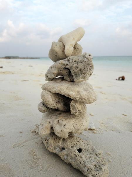 Lebenssteine Malediven Koralle 2
