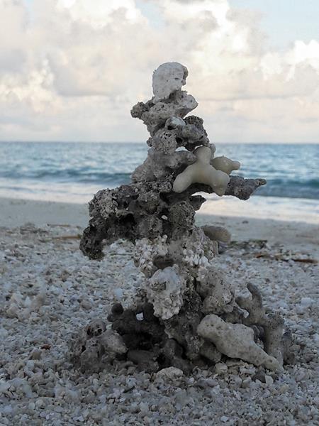 Lebenssteine Malediven Koralle 6